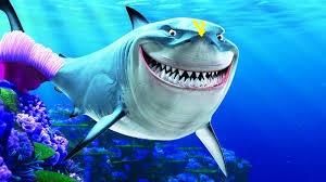 Devotee Shark 1