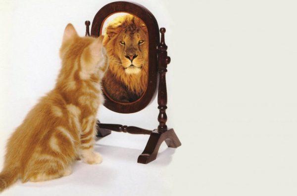 Cat-Sees-Lion