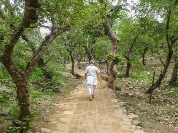 Vrindavan_forest