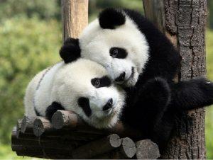 hugging_animals
